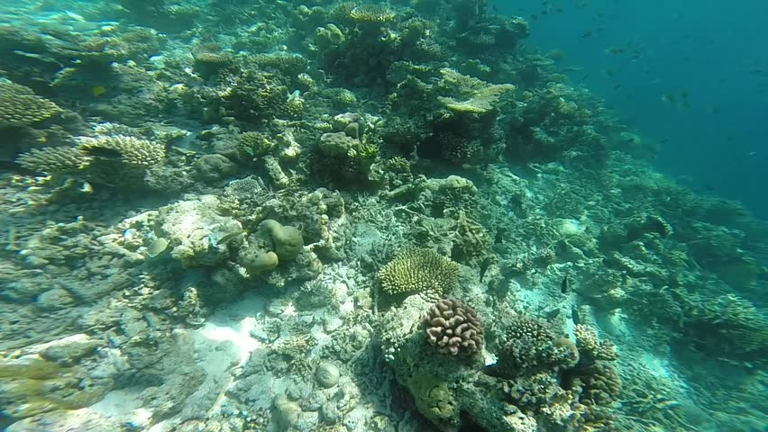 Coral reef scene with numerous tropical fish coming into the frame, Maldives island underwater paradise use for snorkeling or diving background #33512257
