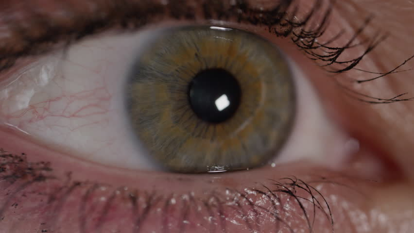 SLOW MOTION CLOSE UP: Female eye pupil contracting as she is looking around and gleam of eye hits pupil. Macro shot of an eye reading, pupil and iris expanding and shrinking in brightly sunlit room.