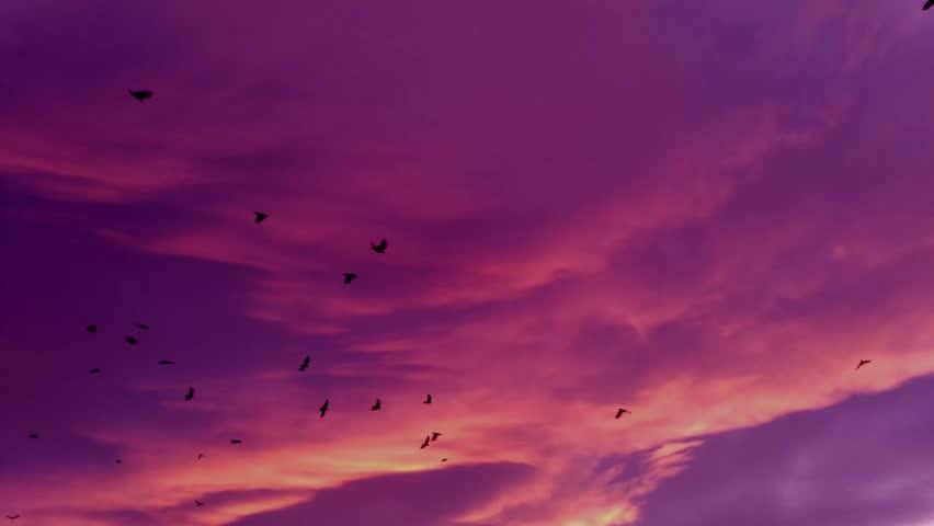 birds fly sky