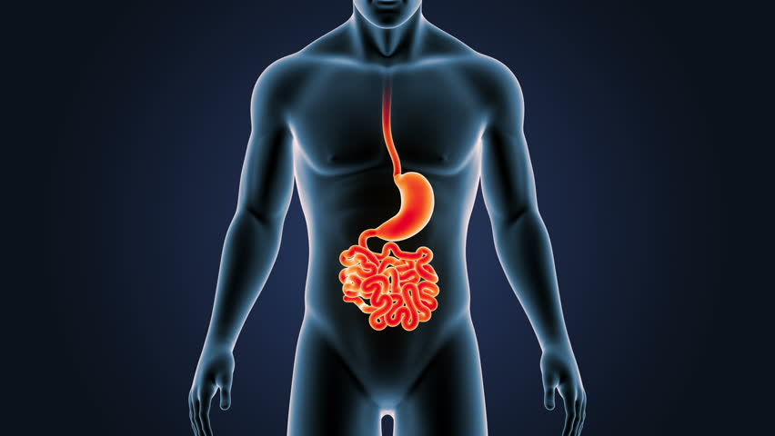 Stock Video Of Anatomy Of Human Male Gut On 26828902 Shutterstock
