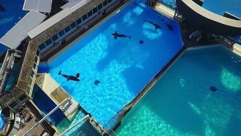 San Diego - Killer Whales - Orca - Drone Video Aerial Video of Killer Whales - Orca. In the pool.