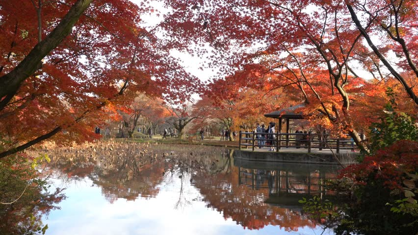 Beautiful fall color, kiosk of Kyoto Botanical Garden, Kyoto, Japan