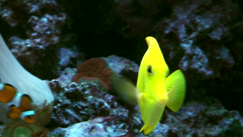 video footage of corals and fisher in a marine water aquarium