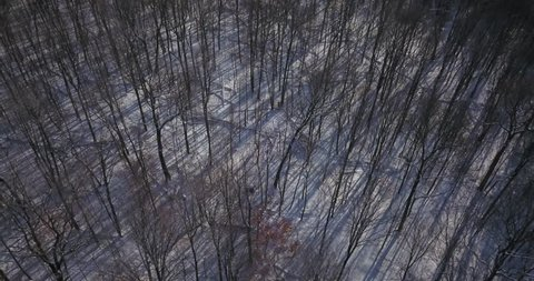 Aerial drone flight low over forest in Oakville Ontario Canada during Winter with everything covered in snow.