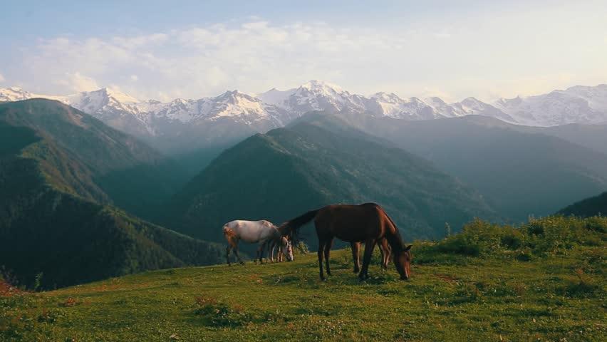 Horses and mountain in Svaneti Georgia