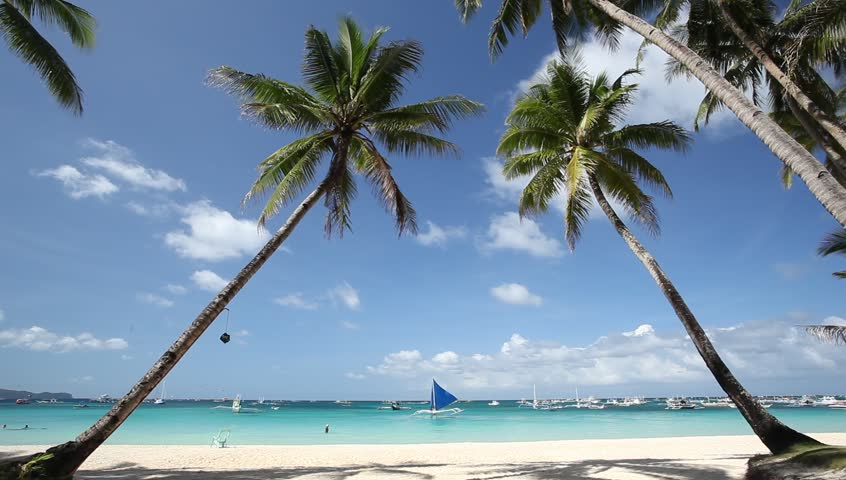 Two palms on beautiful tropical beach #3450389