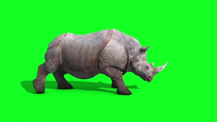 Rhinoceros Attacks Side Green Screen Loop 3D Renderings Animations Animals