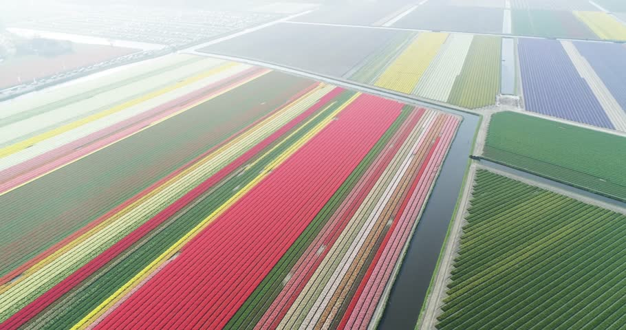 Aerial shoot: Stack of footage, Tulip fields, Amsterdam Netherlands 4k