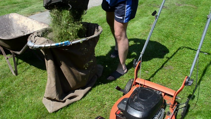 man cut mow lawn with cutter mower put grass into material bag on barrow.