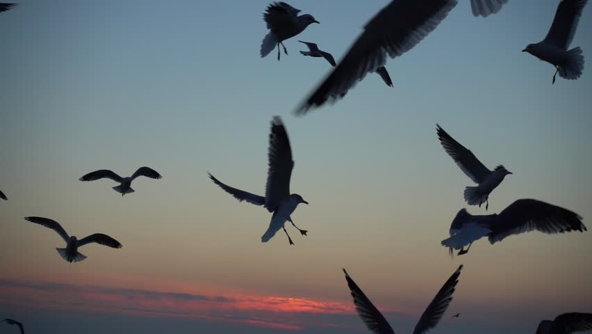 Seagulls fly over the sea. Slow motion.  | Shutterstock HD Video #34888447
