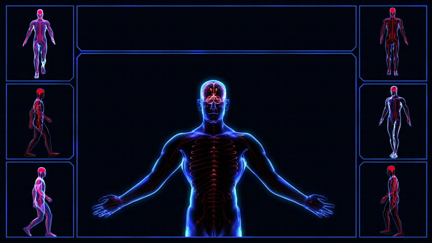 human muscular system stock footage video 3494546 | shutterstock, Muscles