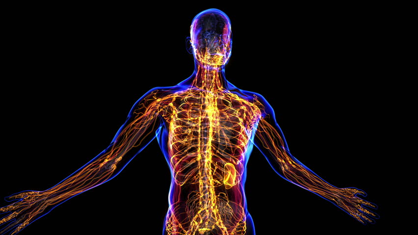 Body future also Organ Systems In The Body Body Organ System Clipart Clipartfest additionally Lymph 20node further Organ Systems And Homeostasis Uncategorized Hajbios Blog in addition Pneumatic Joysticks. on body systems