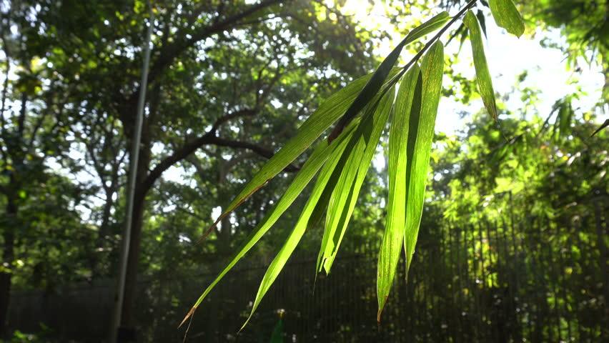 Sunshine coming through backlit green leaves, environmental 4K stock footage | Shutterstock HD Video #34982791