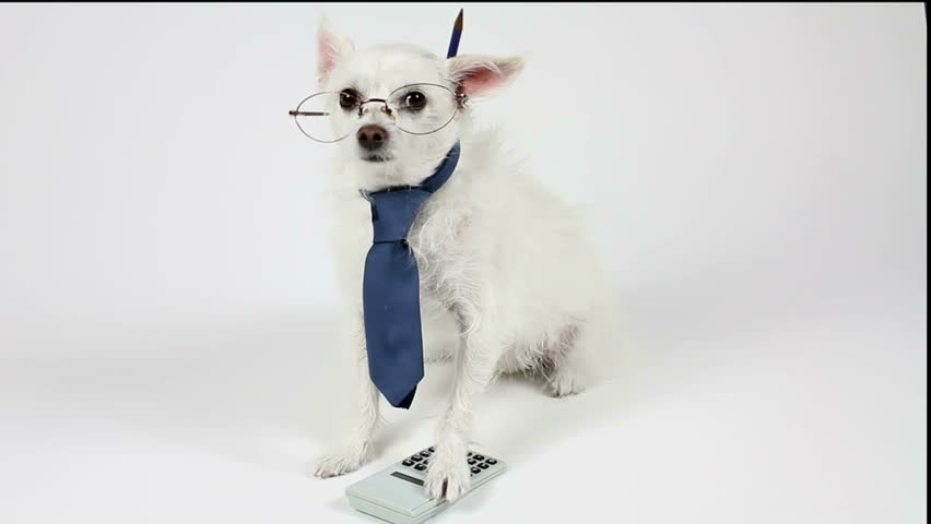 Dog accountant wears a necktie, pencil behind ear, peers over eyeglasses, paw on calculator. Fun financial concept. 1080p
