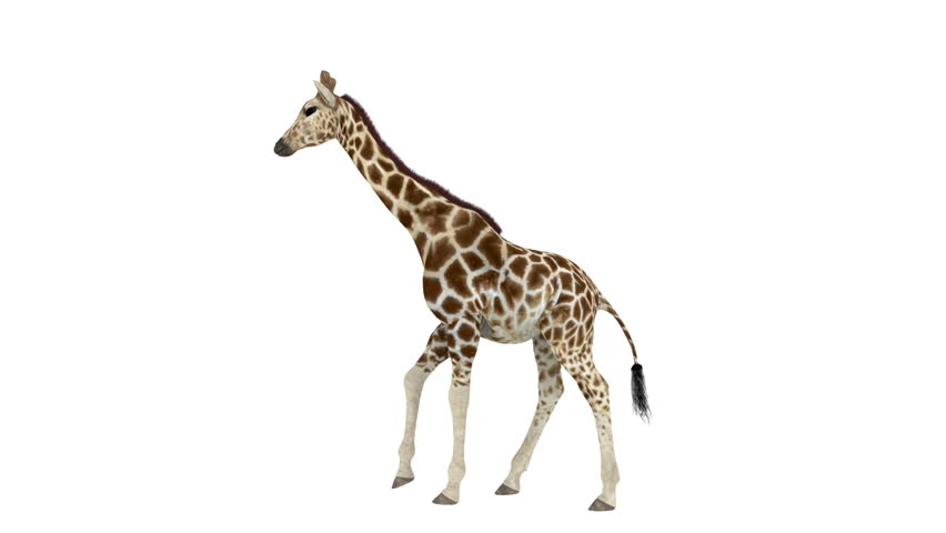 Анимация картинки жираф, для дошкольников