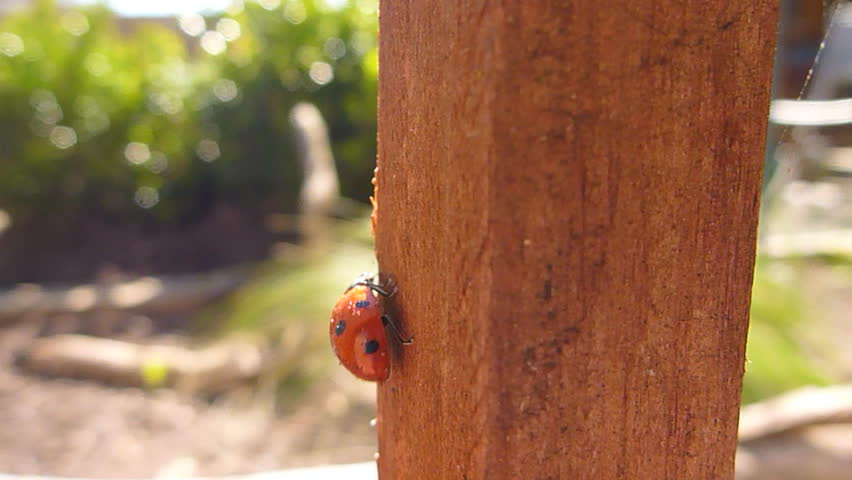 Close up of lady bug climbing garden post.