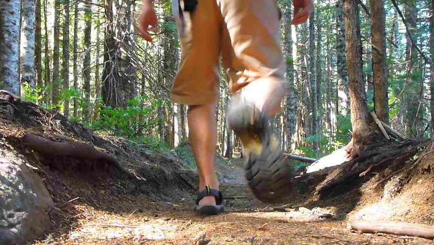 Man hiking away, down trail through thick forest in the Pacific Northwest,