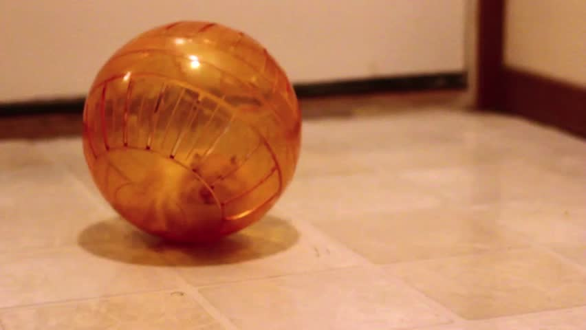Hamster running in ball across floor