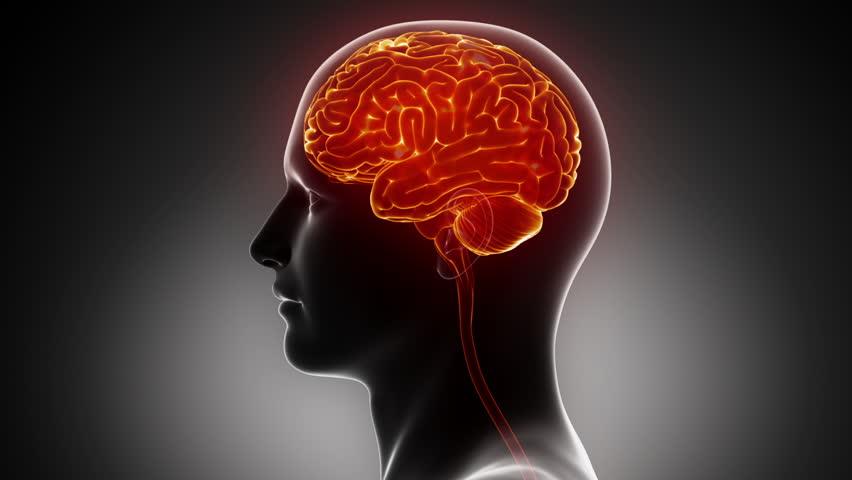 Man Brain Anatomy In Xray Stock Footage Video 100 Royalty Free