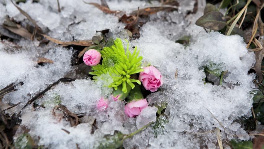 Time-lapse, Spring, snow melt concept