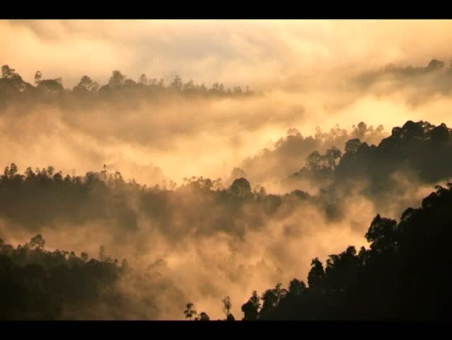 A beautiful time lapse over tropical forest