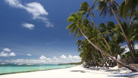 Palm on tropical beach, Philippines, Boracay