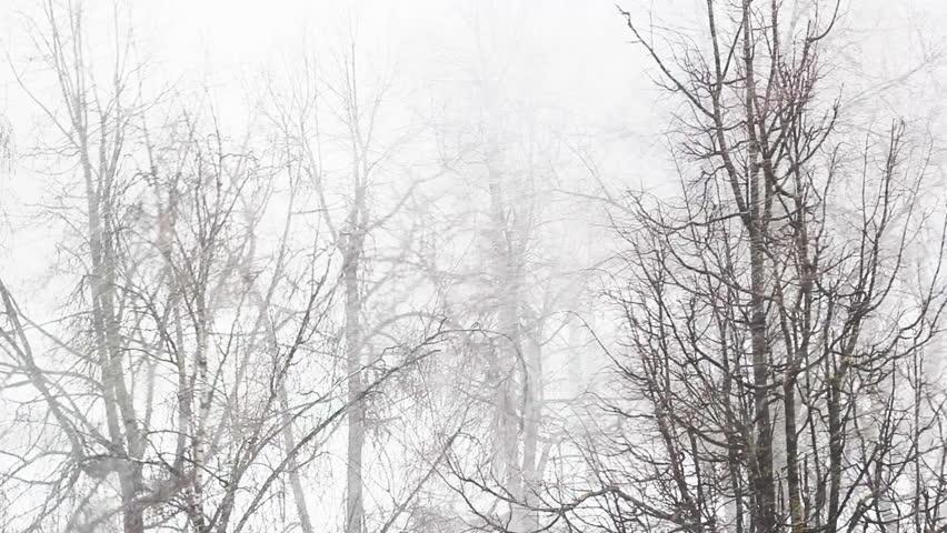 winter trees in heavy snowstorm