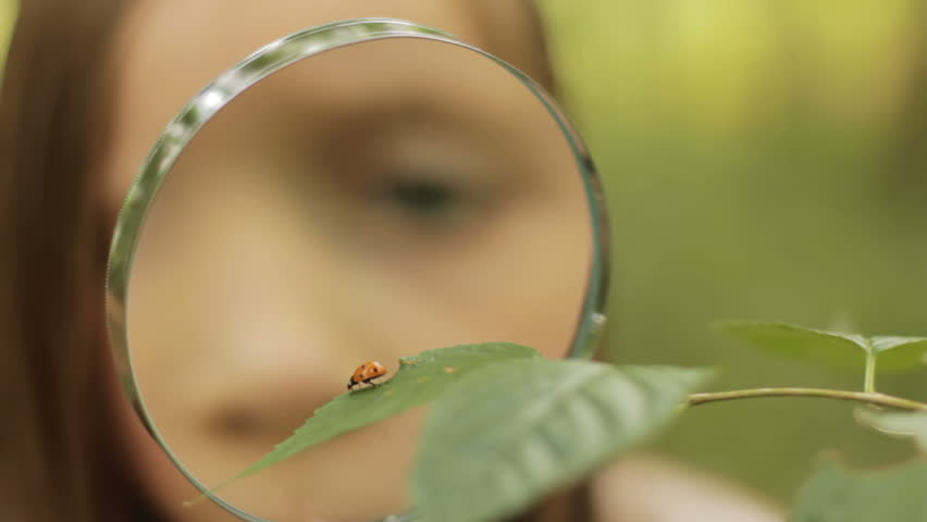 Child studies ladybird - a little girl studies a ladybird in nature with a magnifying glass