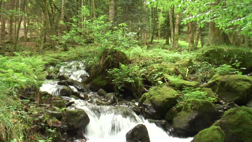 Mountain creek in a green forest in spring. First short horizontal panshot and then vertical panshot. Lauch - Vosges. Tripod. Sound.