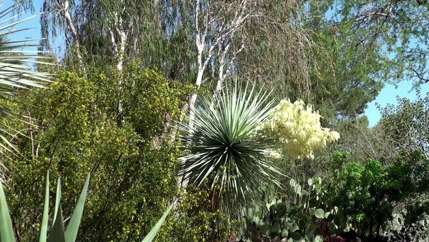 Ethel M Botanical Cactus Gardens, Las Vegas Stock Footage Video 3909107 |  Shutterstock