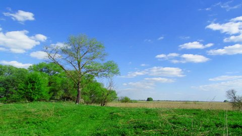 Forest landscape with the sky. Without birds