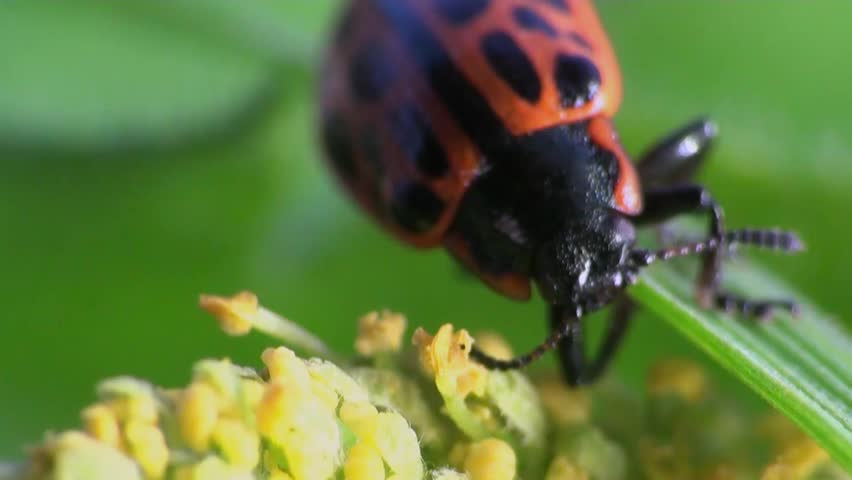 ladybug sitting on leaf