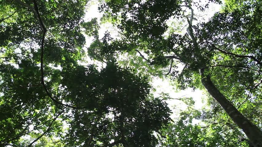 Forest | Shutterstock HD Video #4081567