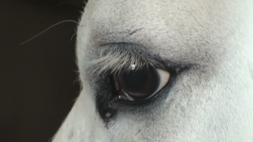 1920x1080 Close up of a horse's expressive eye.