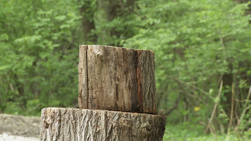 Close up of a Log Stock Footage Video (100% Royalty-free) 4292717    Shutterstock