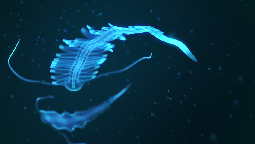 Animation represents fascinating bioluminescent creature floating on dark waters of the ocean. Polychaete Tomopteris.