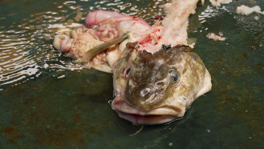 Amazing Hd00:12Carcass And Entrails Of A Fish Quivering In The Water Of A Dumpster  At A Marina Fish Cleaning Station.