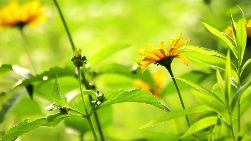 Summer flowers blooming