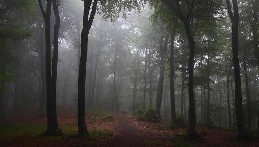 foggy forest with rain drops stock footage video (100% royaltyfoggy forest with rain drops sound