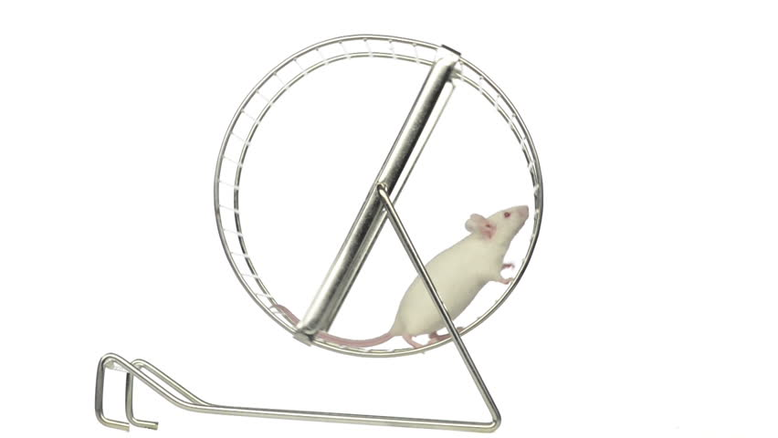 White mouse running in a running wheel in slow motion
