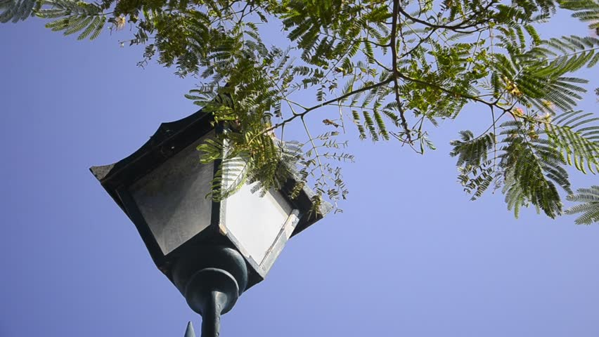 Street lamp Candelabra post loopable. Day shoot of candelabra through the branch