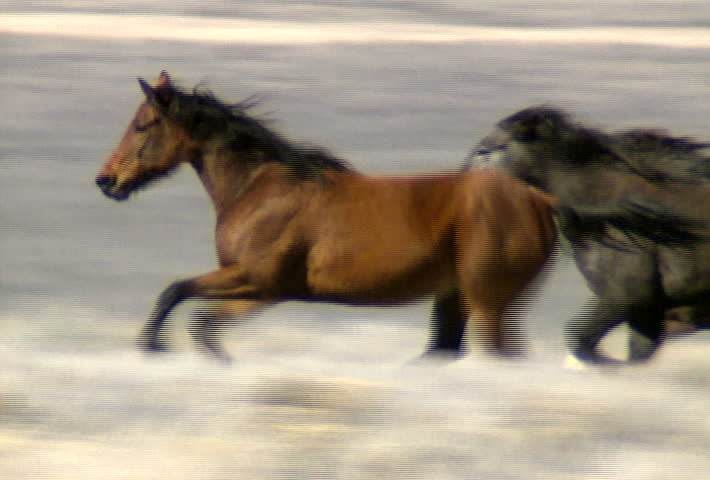 A herd of wild horses gallop across the foothills near Reno, Nevada.