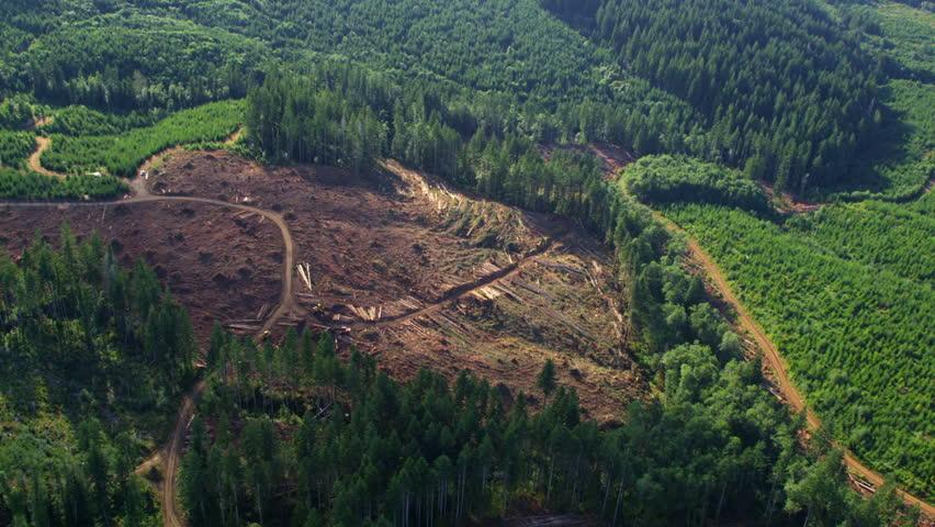 Logging operation in Oregon forest, aerial shot