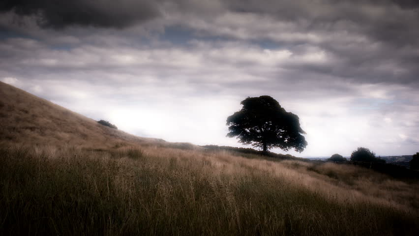 Beautiful Oak Tree Landscape, Situated On A Yorkshire Moor in England.