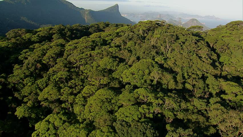 Flying over trees to reveal city, Rio de Janeiro, Brazil