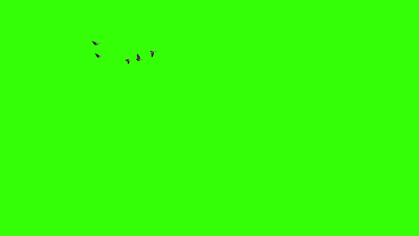 Flock of birds flying. Pack of three. Going away from camera. Coming towards camera and from side to side.  | Shutterstock HD Video #4854044