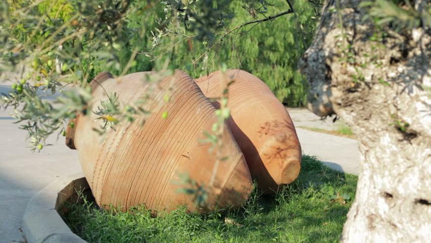 The Old Red Terra Cotta Olive Oil Urn (Big Vase). Antique Mediterranean Olive Oil Urn (Dolly-up. Camera is moving up from urn to olive tree)