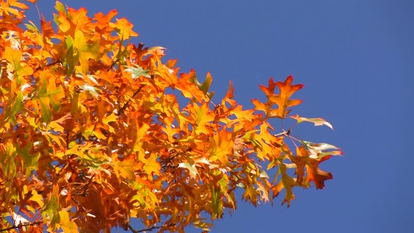 Vivid autumn colors light up the trees.