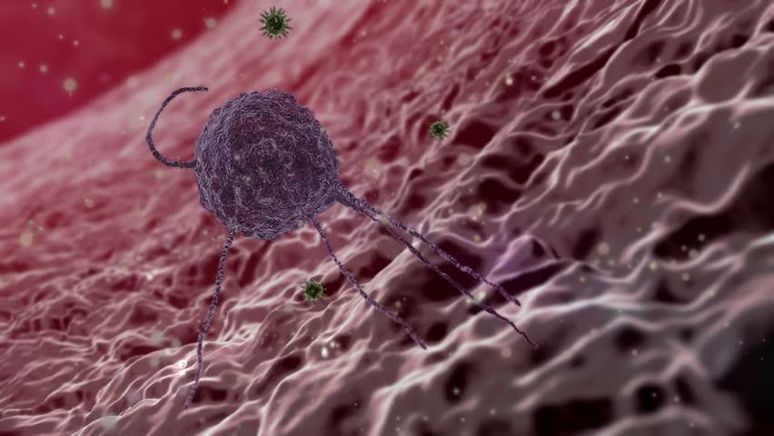 Phagocyte, Fagocytosis, phagocyte kills viruses, inside the human body, medical 3D graphics