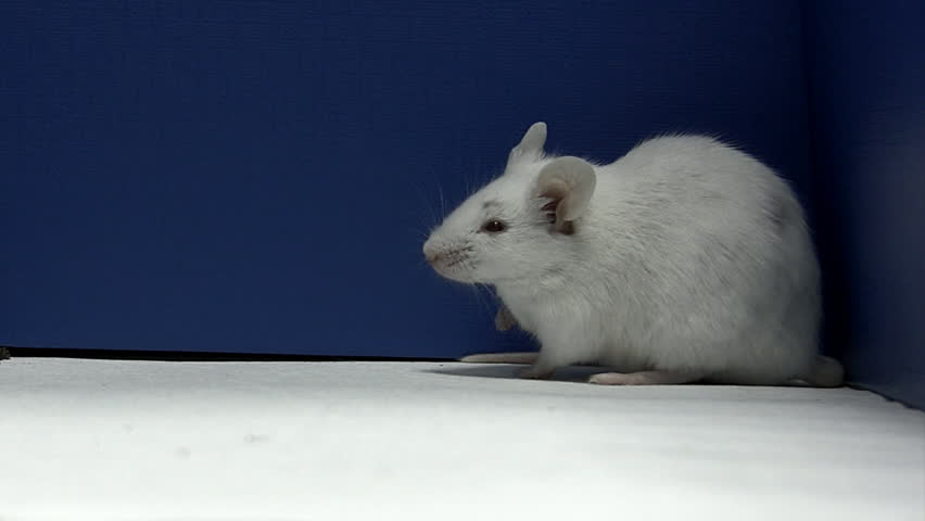 mouse is celaning profil